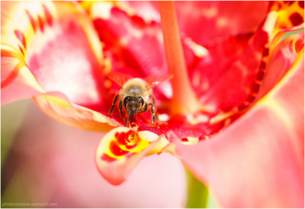 The bee to be