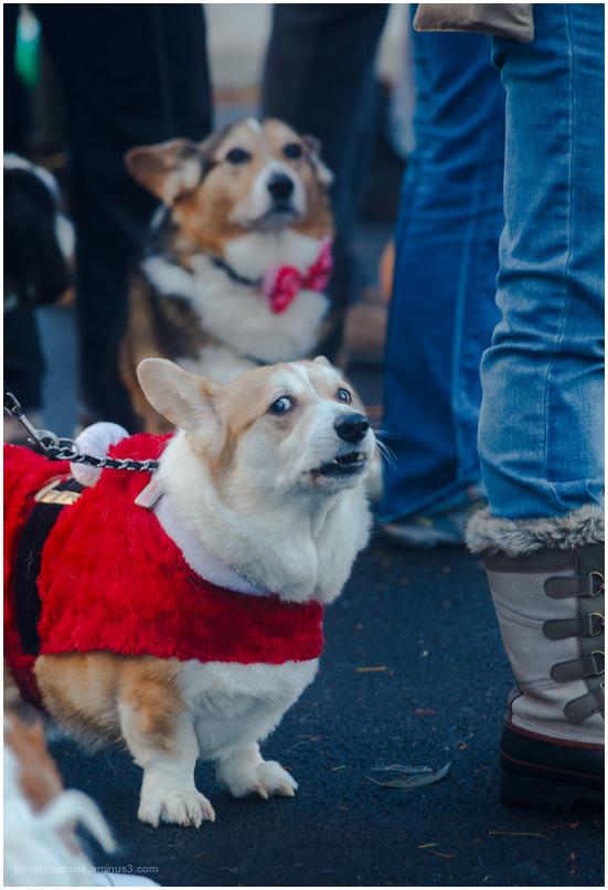 Christmas Parade V