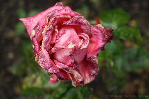 flower 15