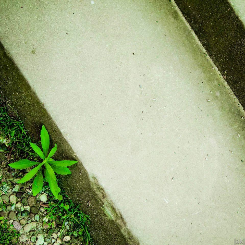 Espace vert dans la ville