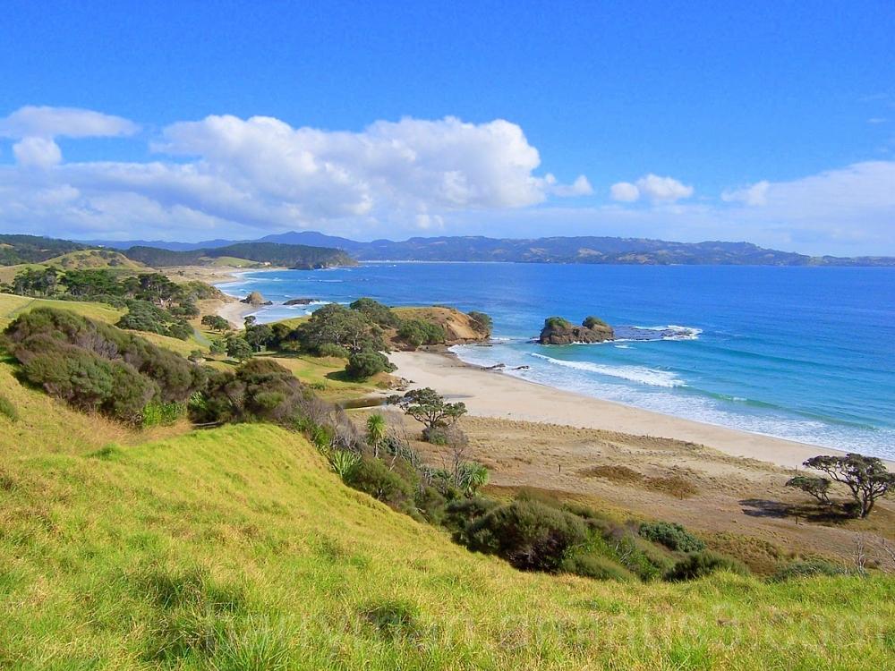 Beach North Island New Zealand