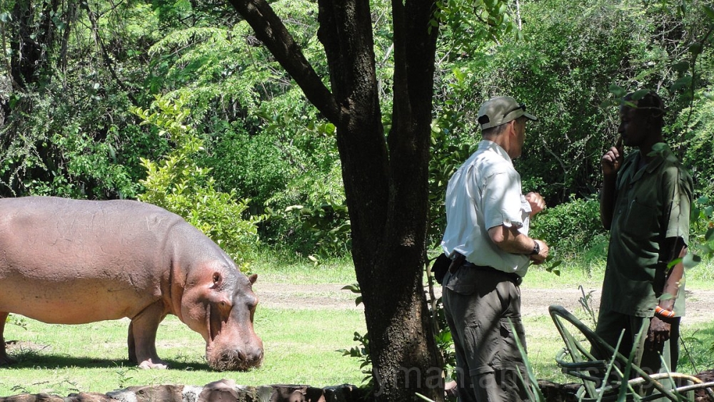 eavesdropping hippo