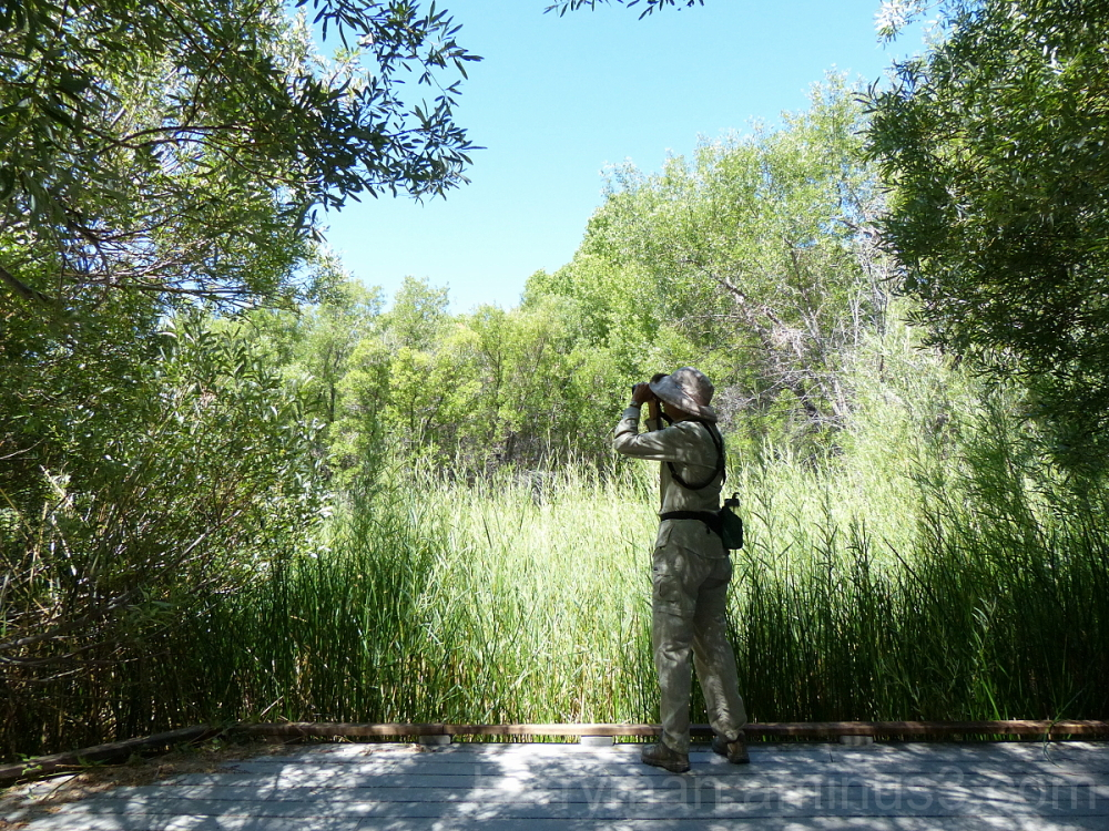birding  big morongo canyon preserve