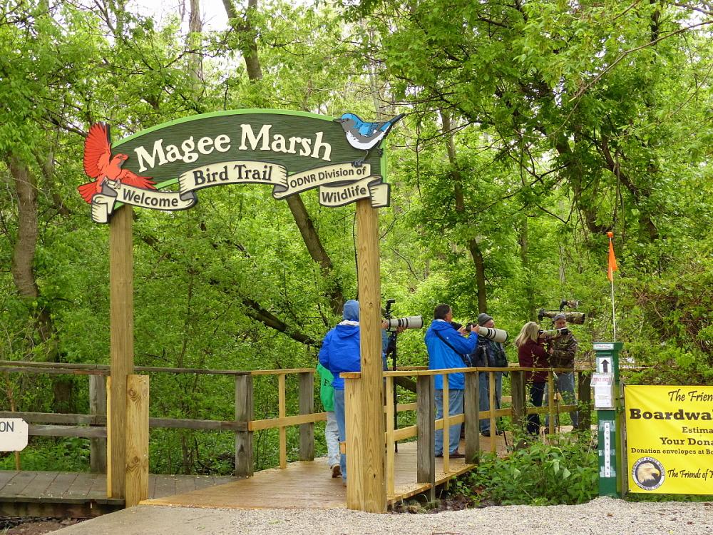 Magee Marsh, Ohio