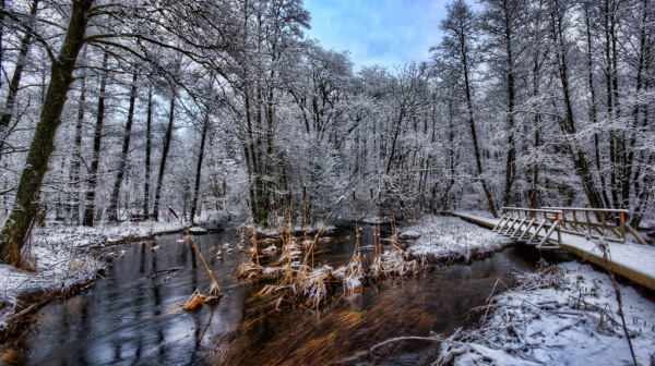 Small lake in winter forest