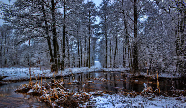 Winter forest and small lake