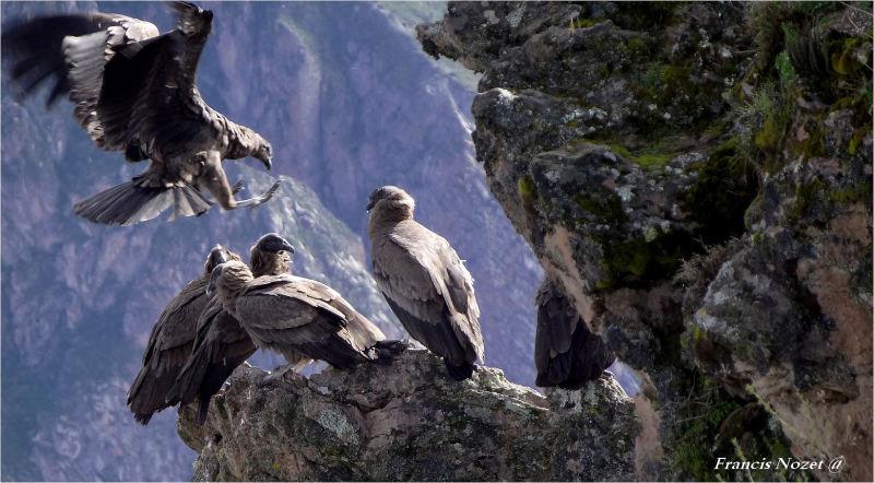El Condor pasa ...
