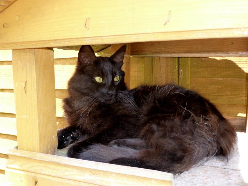 Cat In A Box .