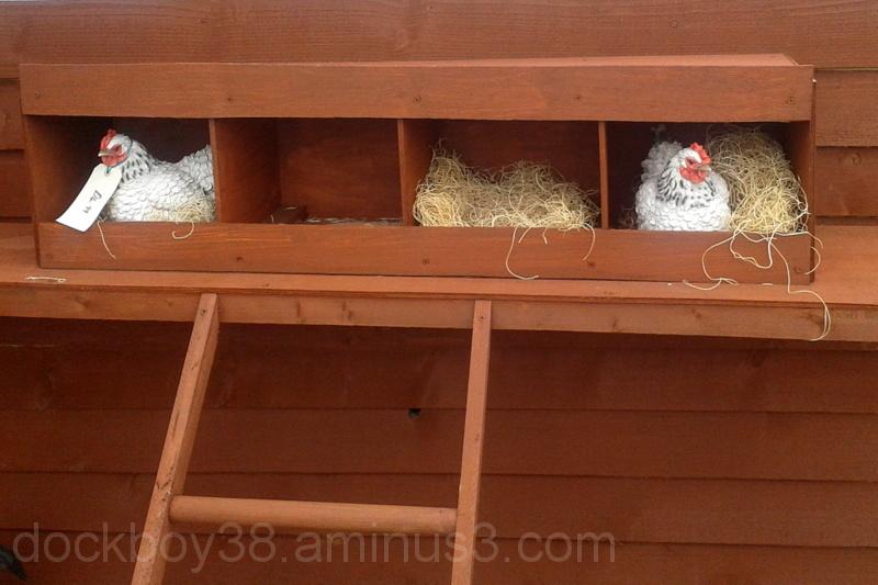 Chickens ? in a Box .
