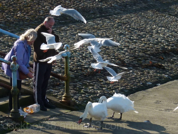 See Gulls Bred to Fly .