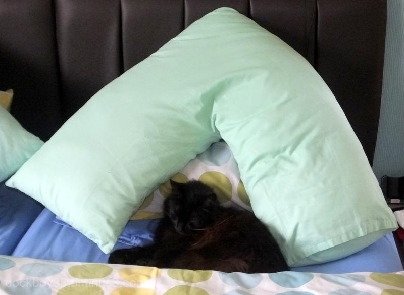 Cats = Comfort . . .