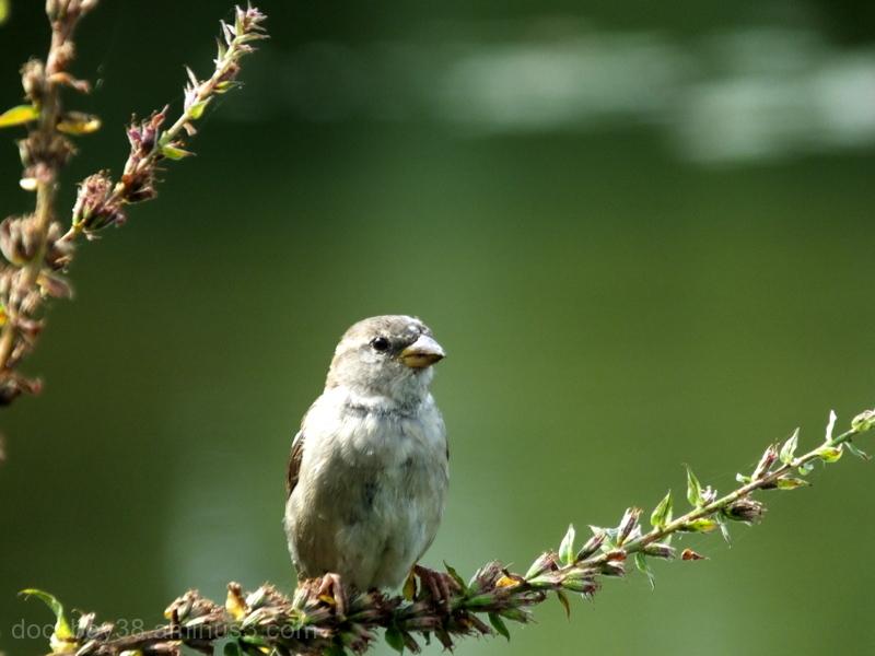 Just a Little Bird ..