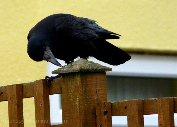 Crow Bar ??? .