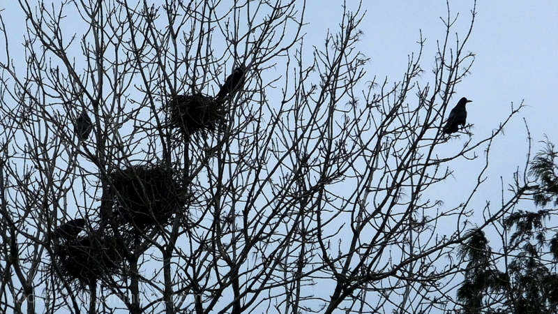 Nests With A View ..