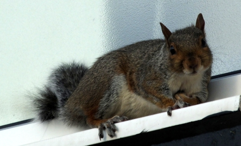 Who's Nuts ?? .