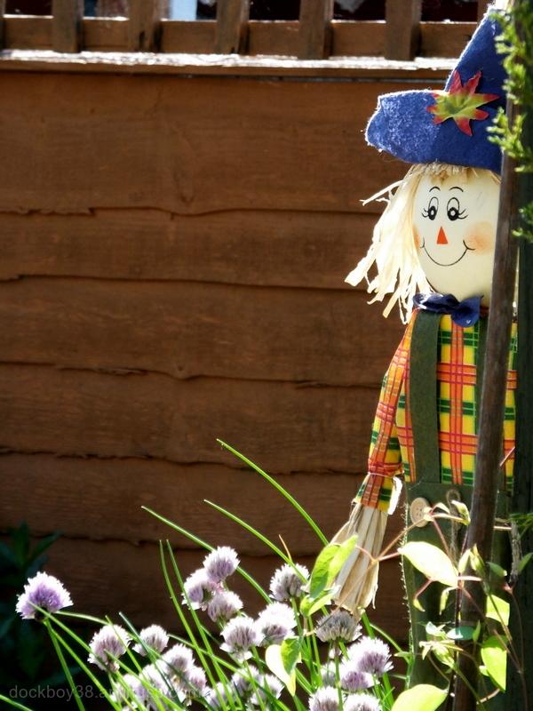 Our Resident Gardener.....