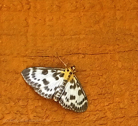 It's a Butterfly / Moth ....