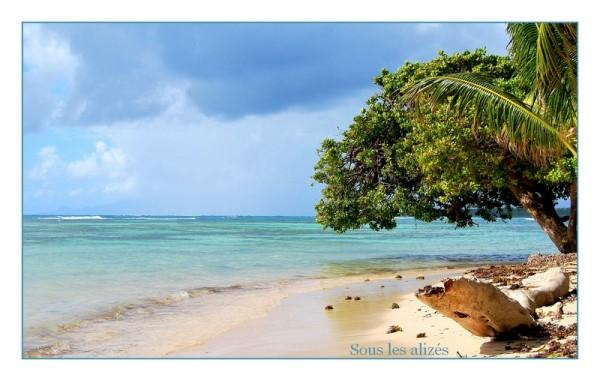 Plage des raisins clairs (Guadeloupe)