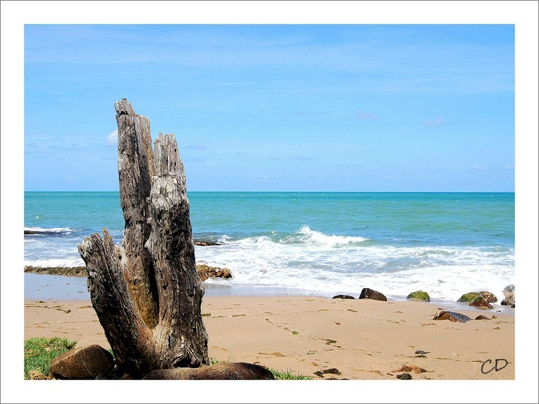 Un petit coin de plage Sainte Rose (Guadeloupe)