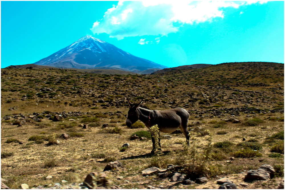 Donkey in Mountain
