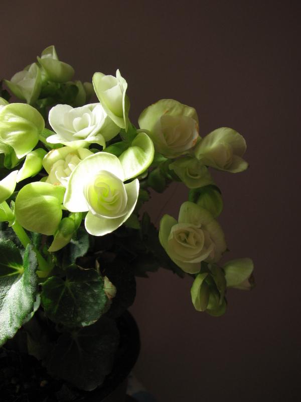 beautiful flower 2