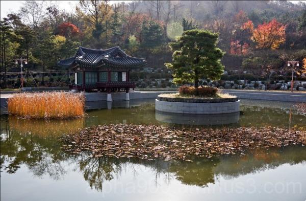 Asian Fall
