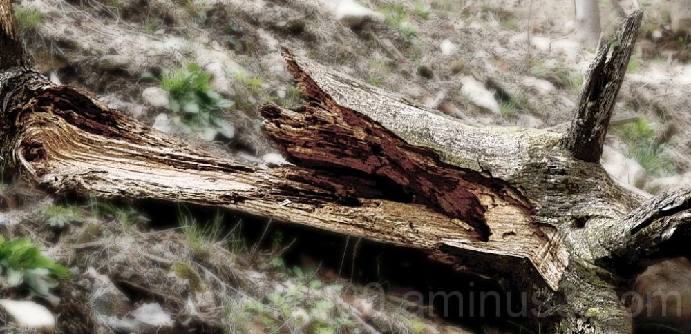 Broken Woods