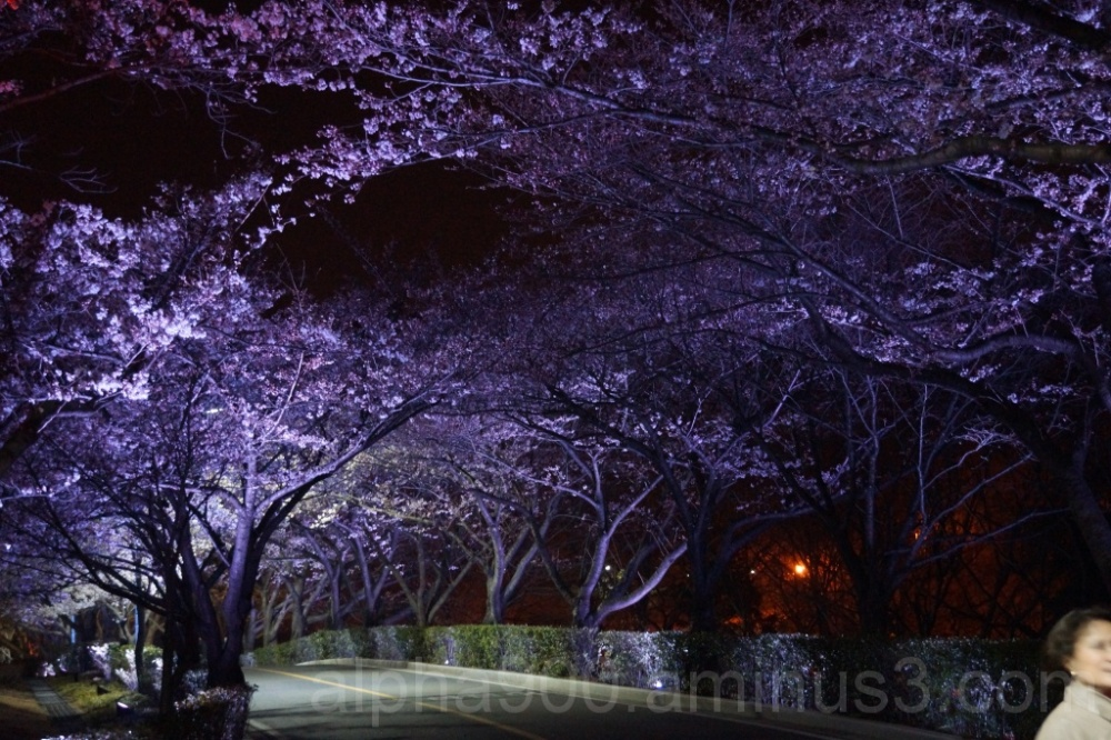 Spring ... by Night