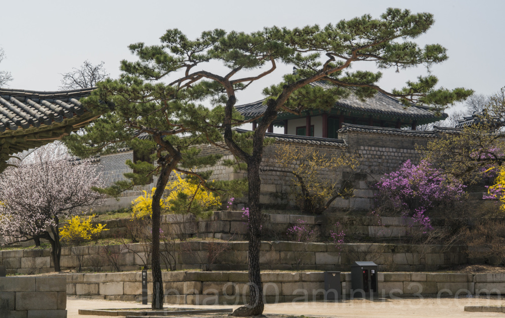 Spring at the Palace 2