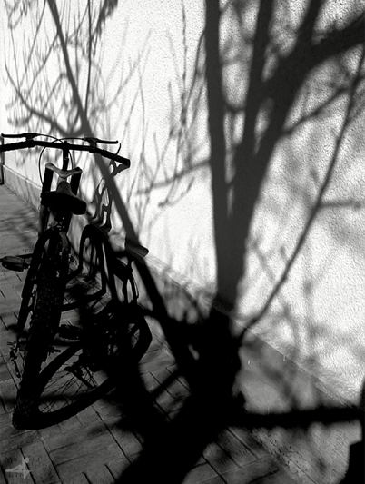 shadow of winter/سایه ی زمستان