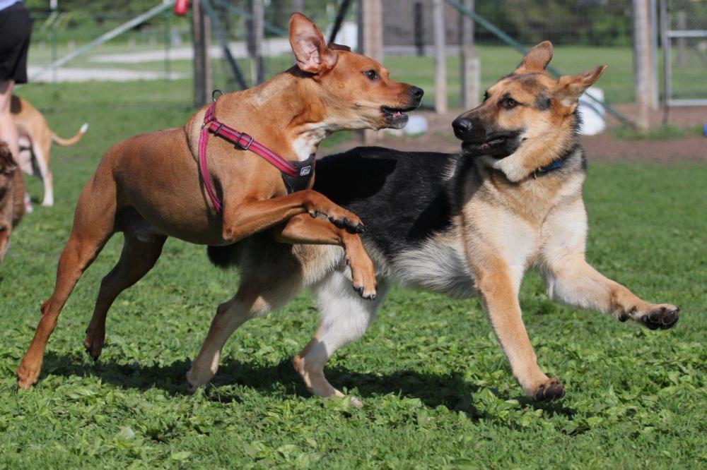 Campton Hills Dog Park, St Charles, Illinois