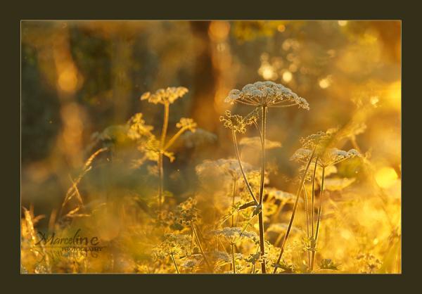 D'or et de lumière