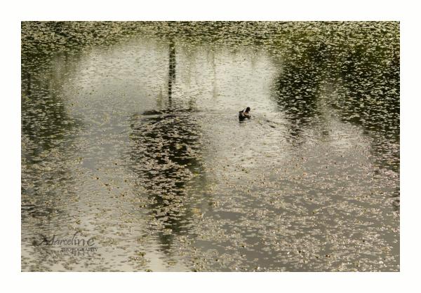 reflet sur eau calme
