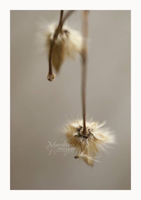 plante en graines