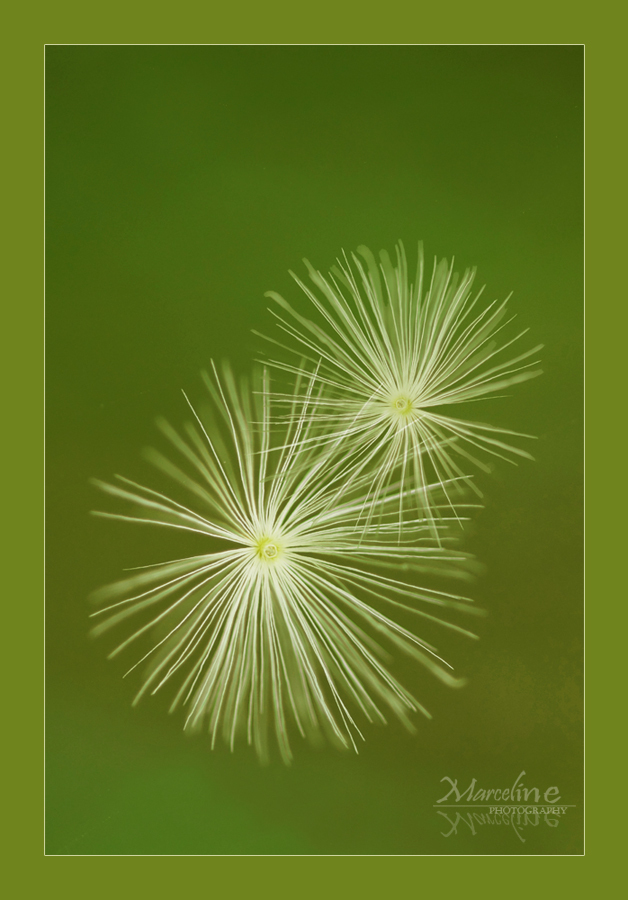 graines de plantes