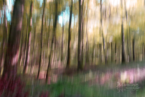 abstraction en forêt