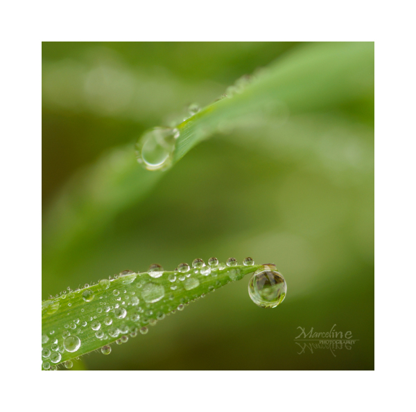 gouttes de pluie sur feuille d'herbe
