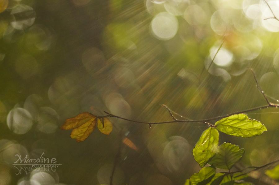feuille d'arbre automne