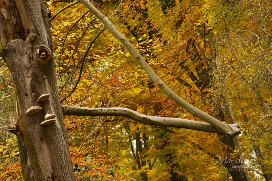 arbre insolite en automne