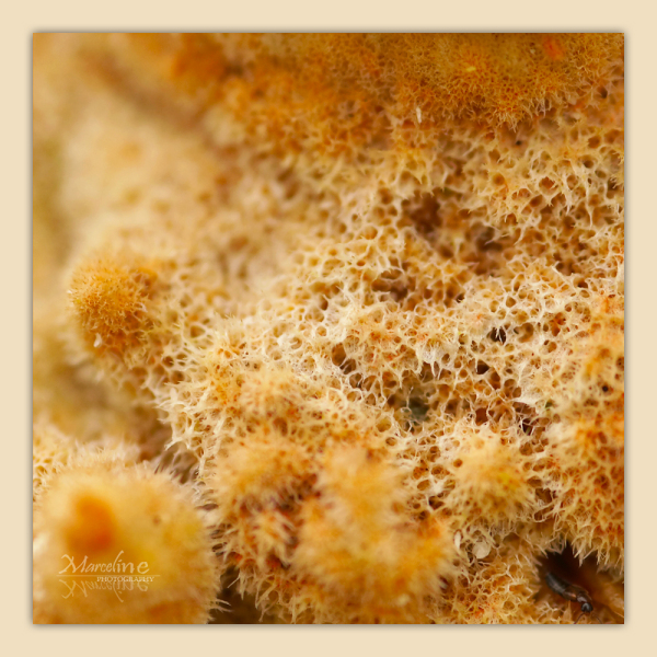 champignon vu en macro