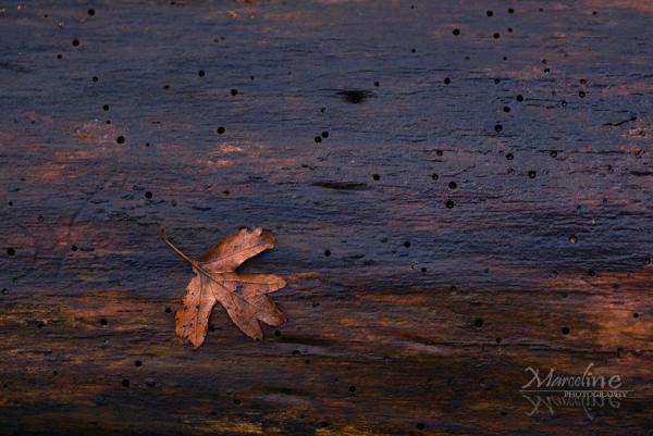 feuille d'automne tombée