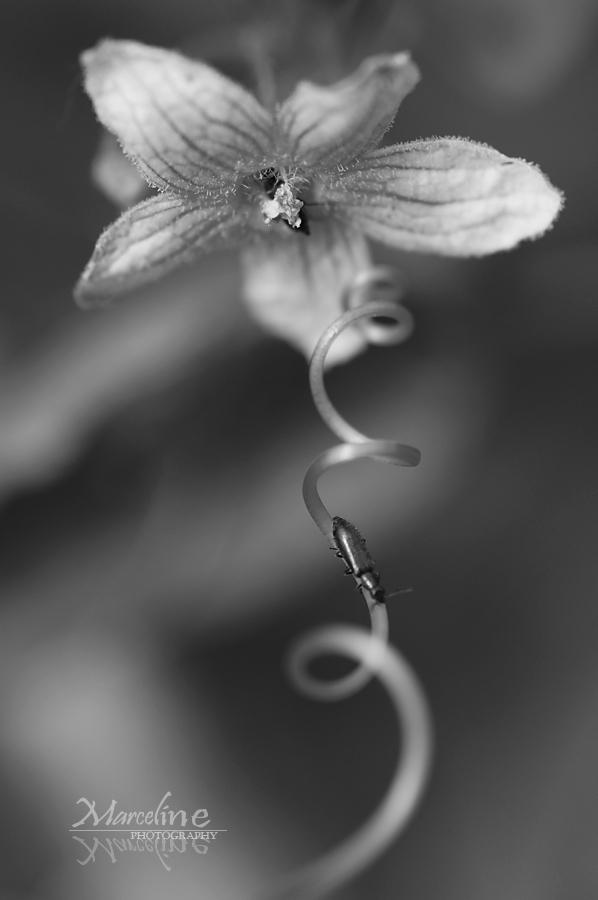 vrille et plante