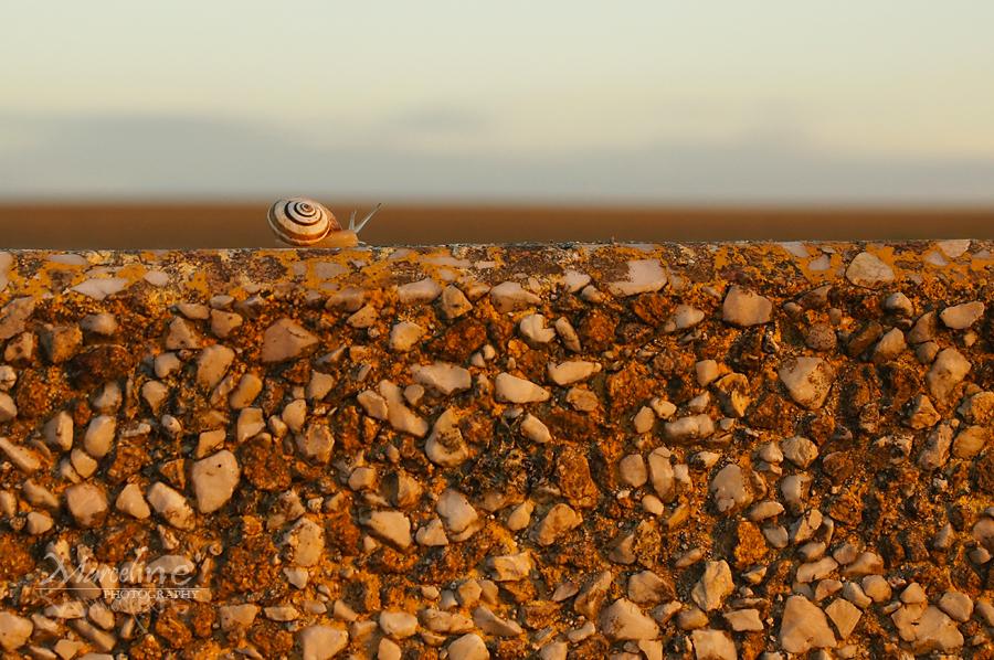 escargot se promenant sur un mur