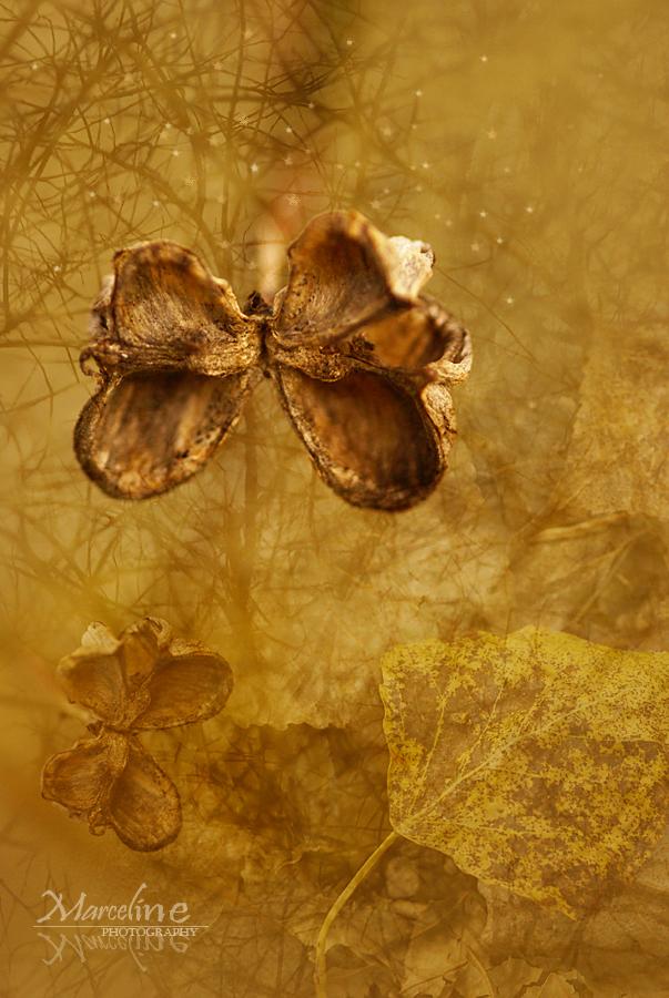 papillon tout en or