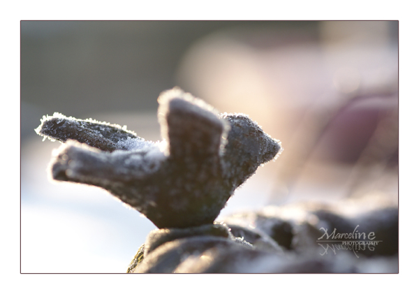 légère neige sur oiseau