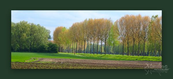 paysage de Belgique