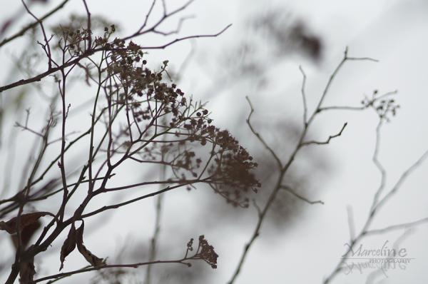 plante sur la neige