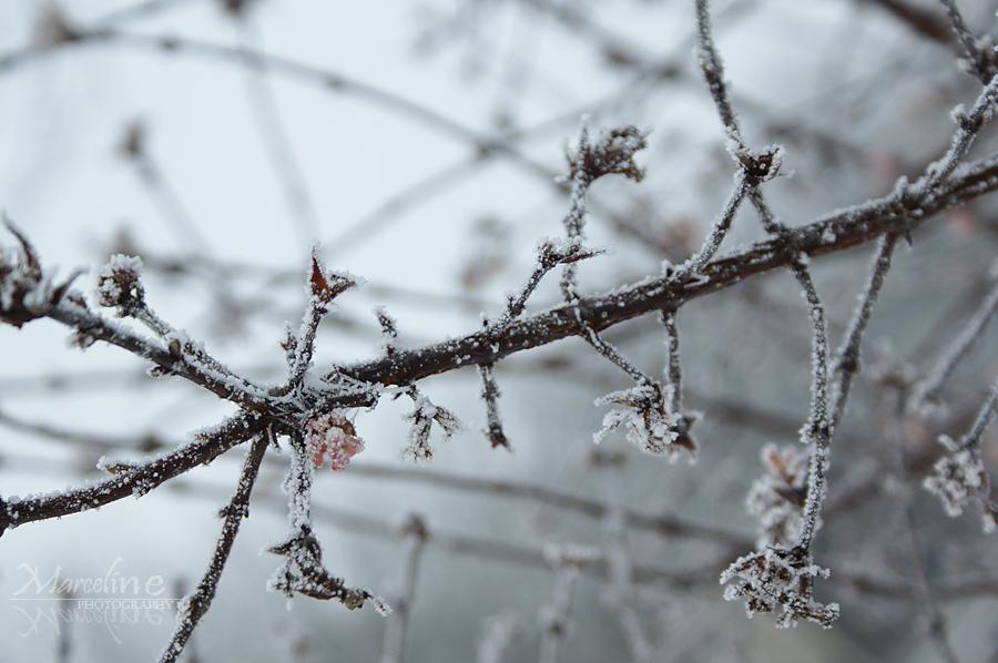 branche gelée
