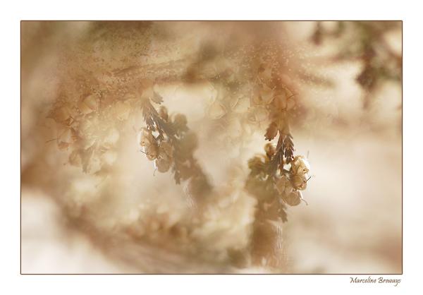 branche de bruyère