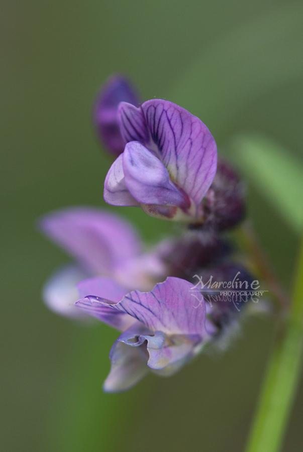petite floraison printanière